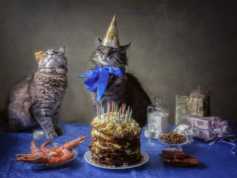 Поздравление с днем рождения кошки